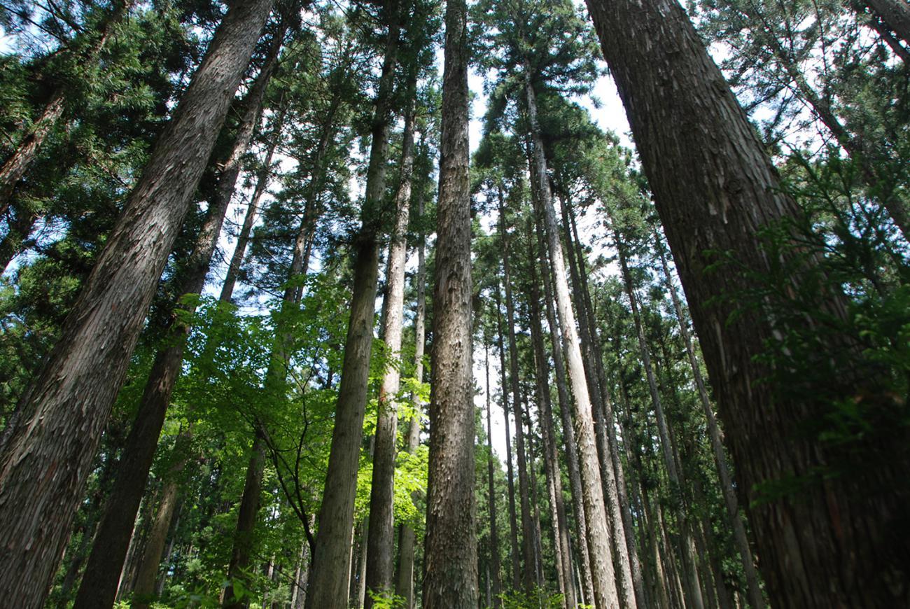 毎年恒例!森の見学ツアー