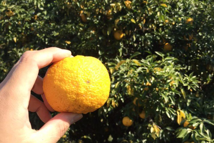 祖父母の「柚」