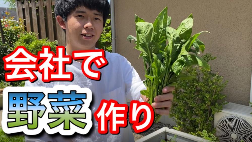 【必見!】プランター家庭菜園はじめました!