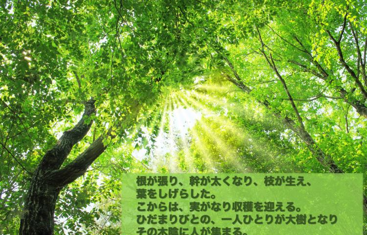 『ひだまり人が大樹となる』